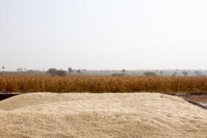 Uganda - Amatheon Agri - 2