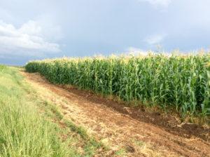 Zimbabwe - Amatheon Agri - 2